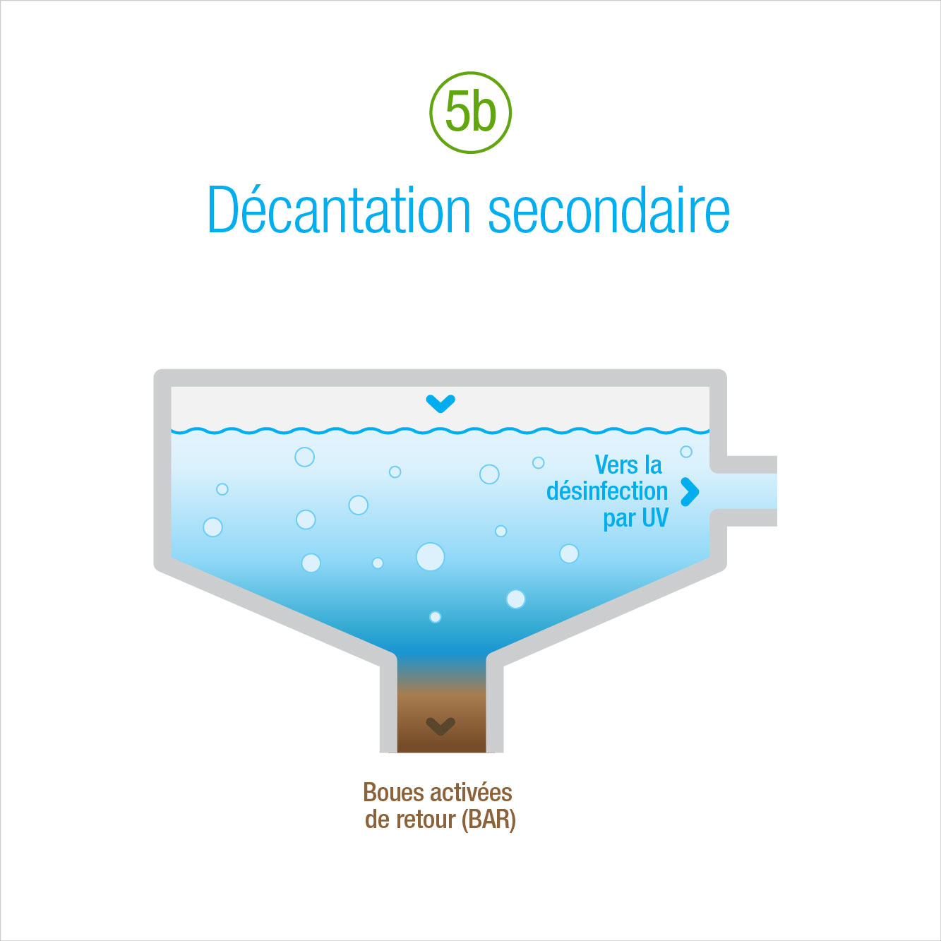 5b: Décantation secondaire
